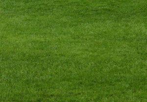 das Rasenjahr, Bild zeigt ein perfektes Grün